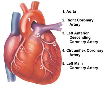 coronary_arteries